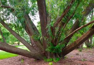 treemccrory